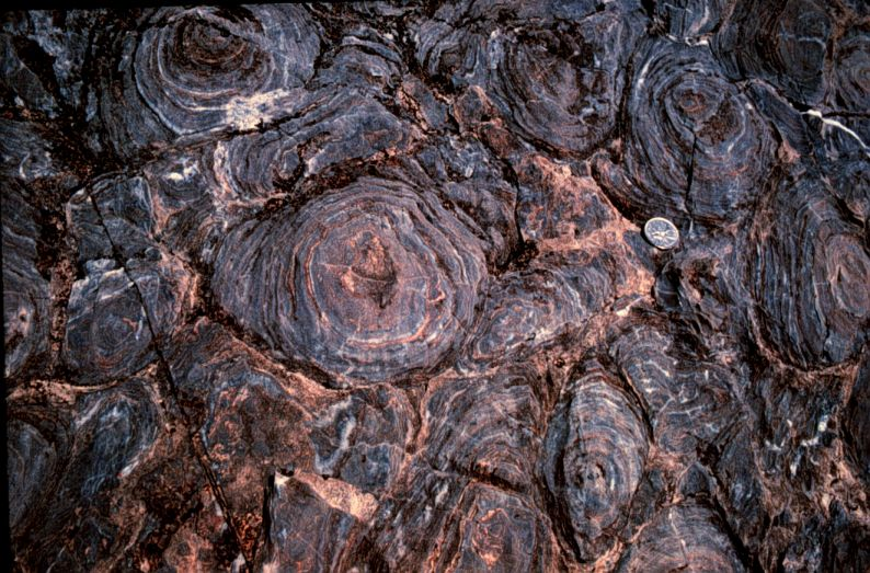 tl_files/sites/ees/Images/news/stromatolite.jpg